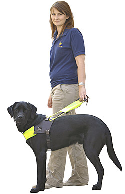 a report on guide dogs The guide dogs annual report and accounts to date in pdf and plain text formats  reports, accounts and annual reviews if you would like to request an alternative format, or if you would like to see information from previous years, please get in touch: guidedogs@guidedogsorguk.